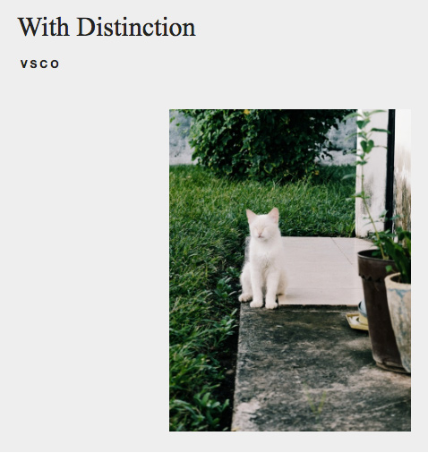 Sleepy White Cat VSCO Curated Search Result