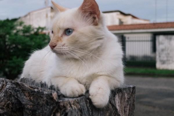 My Week in Pictures – Más Gatos