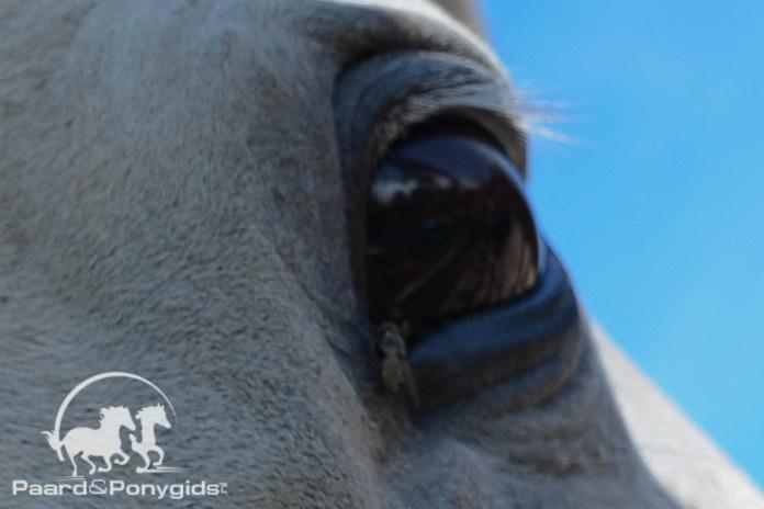 Paard overleden na aanrijding met auto