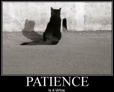 Patience in investing