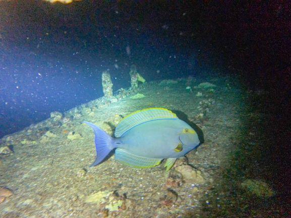 Night dive - fish
