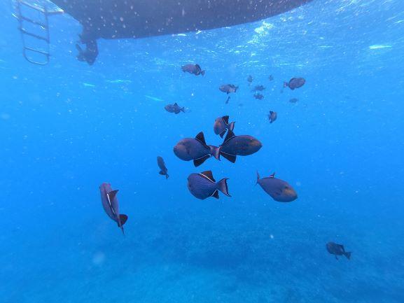 fish - boat Black_durgeons_under_HoneyAnn