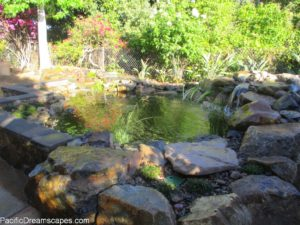 San Diego Backyard Landscaping Ideas