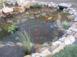 Backyard Fish Pond