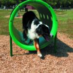 dog park doggie crawl equipment