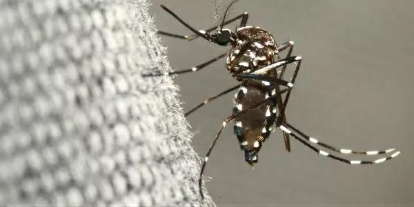 Moaquito representing mosquito-borne diseases