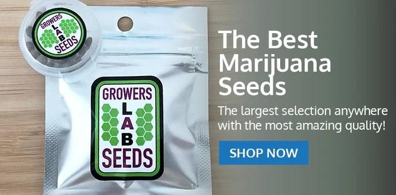 PSB-marijuana-seeds-brookline-1