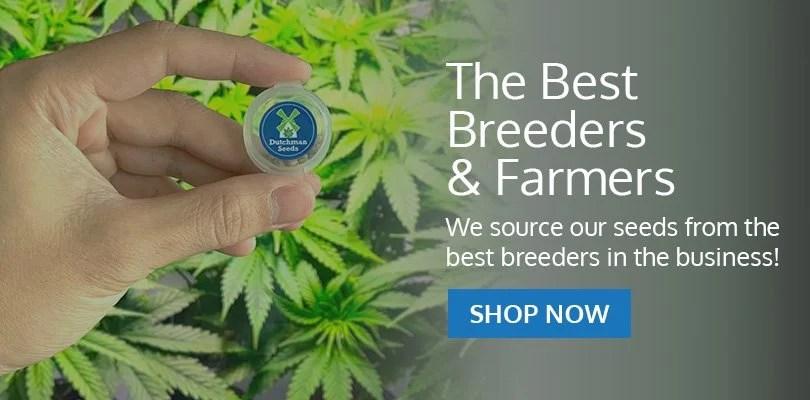 PSB-marijuana-seeds-fontana-1