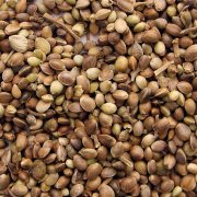 Semillas de Marihuana/Seeds of Marijuana