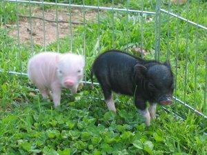 I Cucciolotti di Corinna, Turbo e Mini