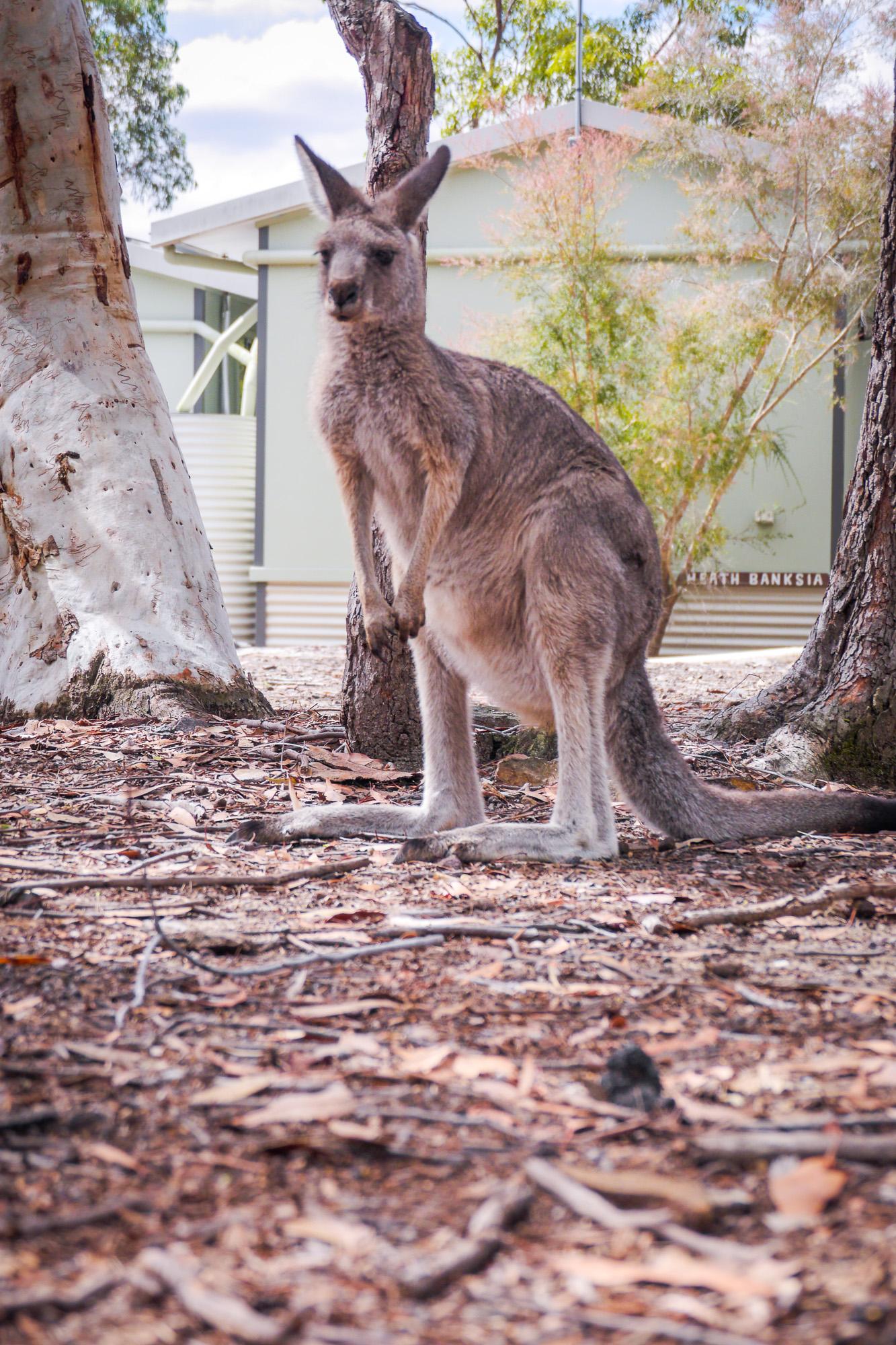 Walkabout, Australia