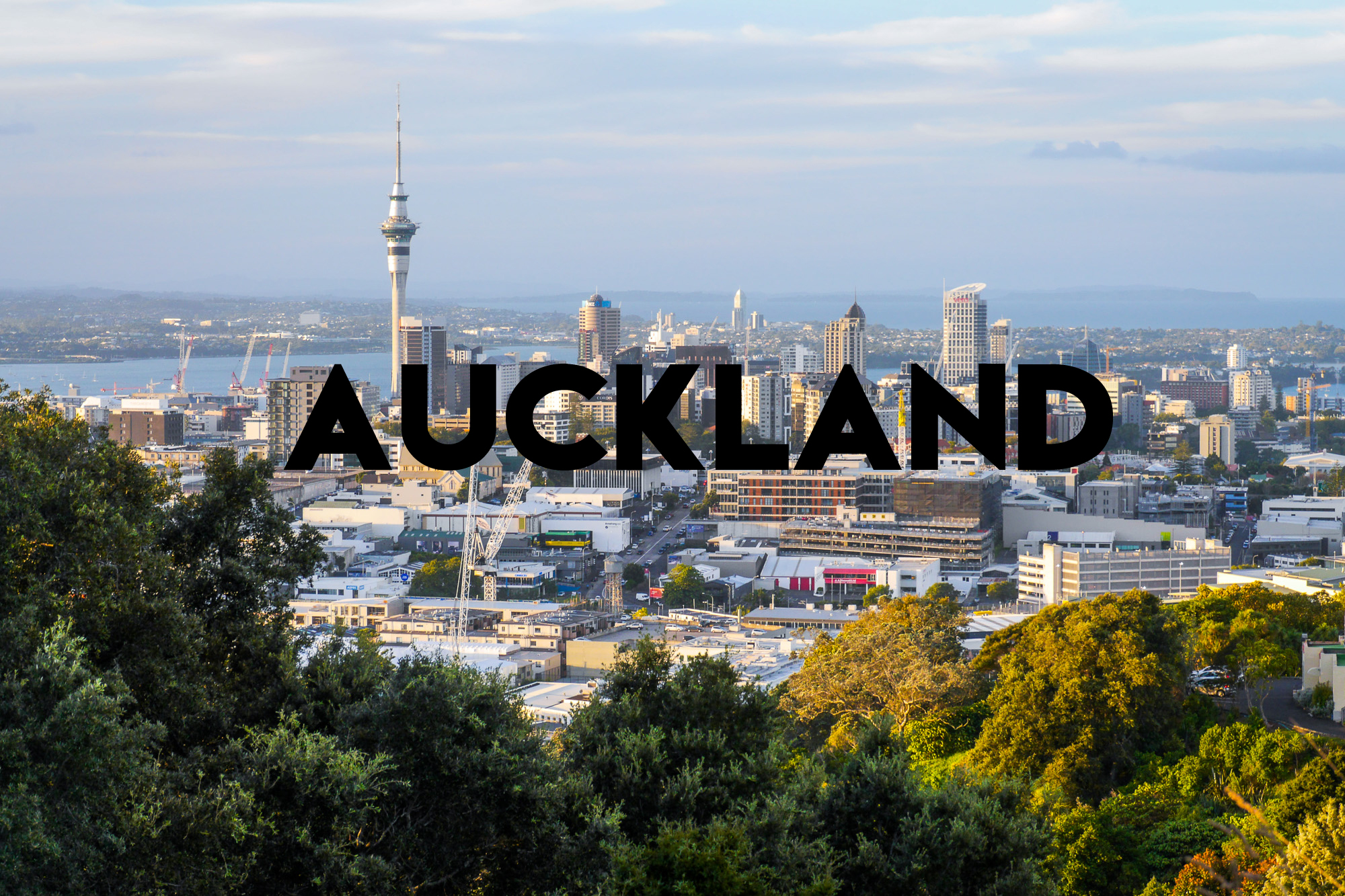 An Adventure in Auckland with Two Dogs and a Couple of Cats