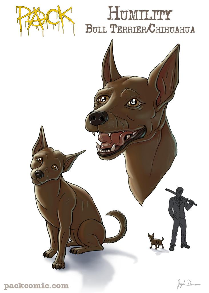 Bio pic of Humility, the Chihuahua/Bull Terrier mix