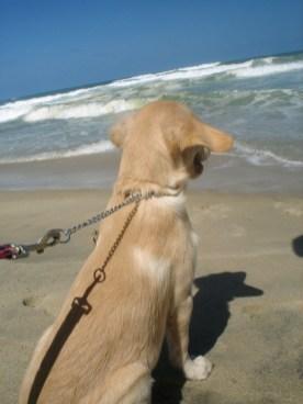 Enjoy the sun and the beach in Brazil