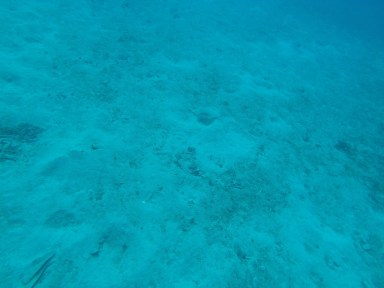 Can you spot the little stingray?
