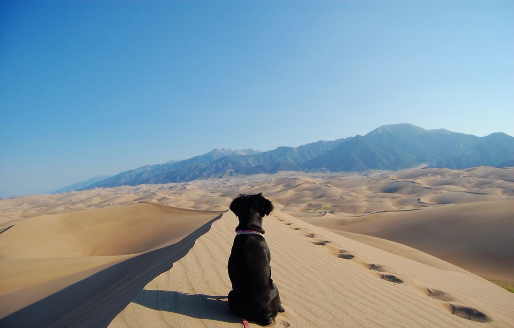 Great Sand Dunes National Park, Colorado | Landscapes Collab | Packs Light