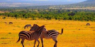 Viagens ao Quénia
