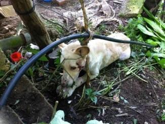 Animales se sufren maltrato y abandono ya podrán ser rescatados por la policía
