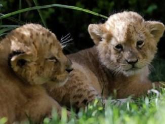 Nacen 50 especies durante la temporada de confinamiento por Covid-19 en Zoológico de Hidalgo