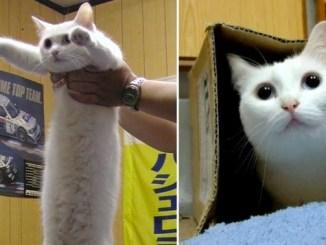 """Muere el """"gato largo"""" de Japón, la leyenda de los memes"""