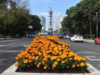 206 mil flores de cempasúchil decoran ocho camellones de la CDMX
