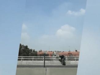 Oficiales rescatan gatito herido en segundo piso del Periférico #VIDEO