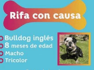 Denuncian rifa de perro en DIF de Jalisco