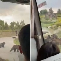 Visitantes de reserva ecológica graban mortal ataque de osos a cuidador #VIDEO