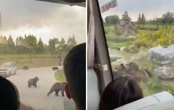 Visitantes a reserva ecológica graban mortal ataque de osos a cuidador #VIDEO