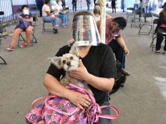 En Iztapalapa quieren cerrar el año con 20 mil esterilizaciones gratuitas de mascotas