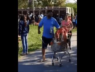 Un camión cargado de cerdos vuelca y la gente los degolló en plena calle #VIDEO