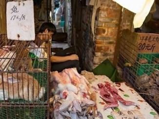 A un año del primer caso de Covid-19 en Wuhan, mercado opera sin ninguna medida sanitaria #VIDEO