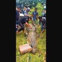Cocodrilo se traga a niño, vecinos lo matan y extraen cuerpo