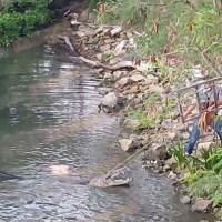 Cocodrilo mata a mujer mientras lavaba ropa, en Tamaulipas #VIDEOS (IMÁGENES FUERTES)