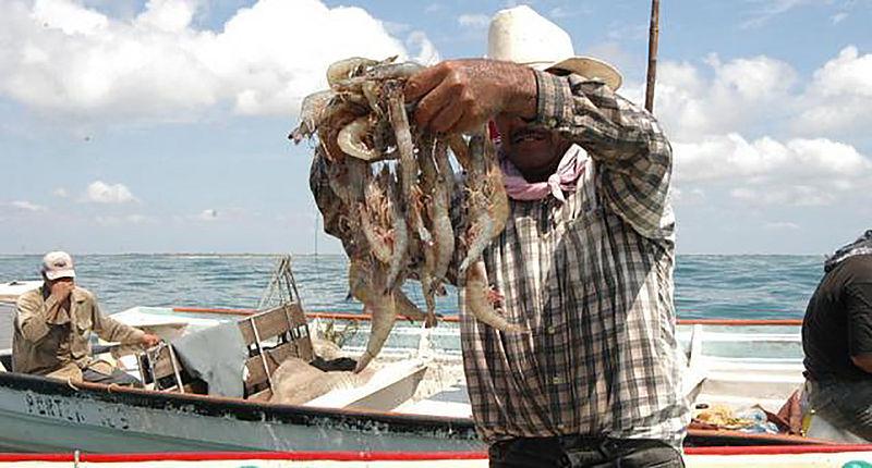 Pide México a EU levantar el embargo a pesca ribereña de camarón
