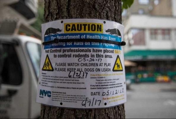 NY reporta brote de rara enfermedad relacionada con las ratas