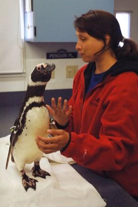 Penguin10 lo-res