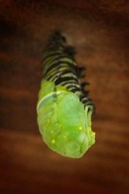 Monarch04 lo-res