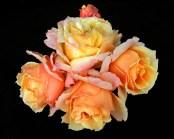 Rose Bunch01 lo-res