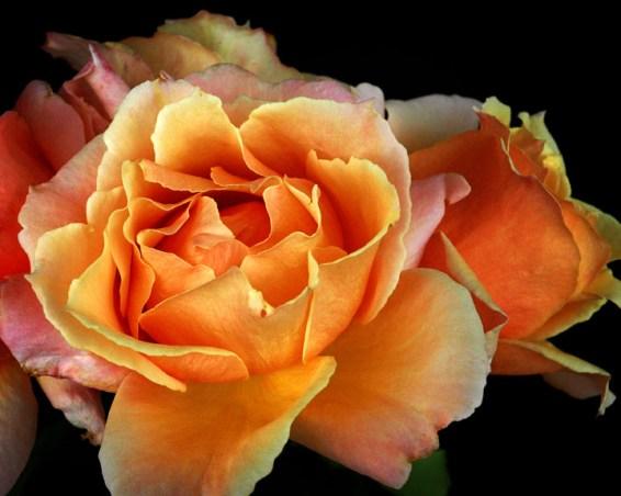 Rose Bunch03 lo-res