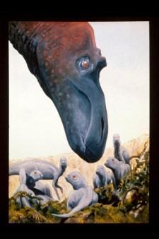 Maiasaurus and babies