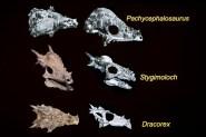 Mislabeled skulls