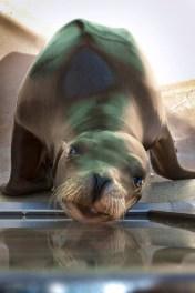 SeaWorld12 05-15-12 lo-res