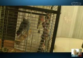 Pet bird that understands Hungarian