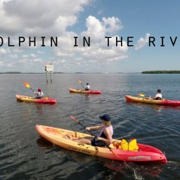 Best ways to see dolphin on the Indian River Lagoon