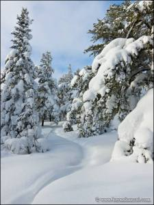 Snow covered trees on the Eagle Mountain summit trail.