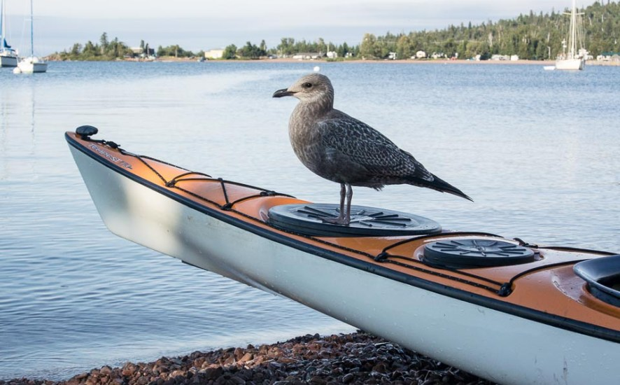 kayak and a seagull