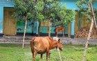 করোনায় শিক্ষাপ্রতিষ্ঠানের বেহাল দশা
