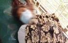 মান্দায় একঘরে জরিমানা দেওয়া গৃহবধূ শেফালিকে অপহরণের চেষ্টার অভিযোগ