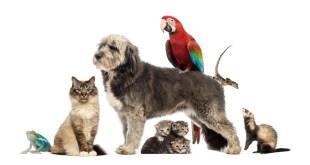 Prodotti per animali, cresce il business in rete